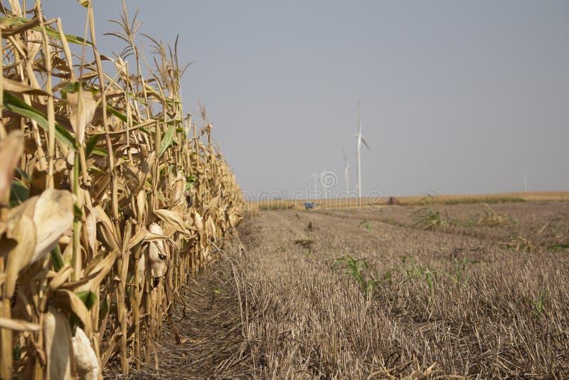 准备好的麦地收获与距离的风力场 库存照片