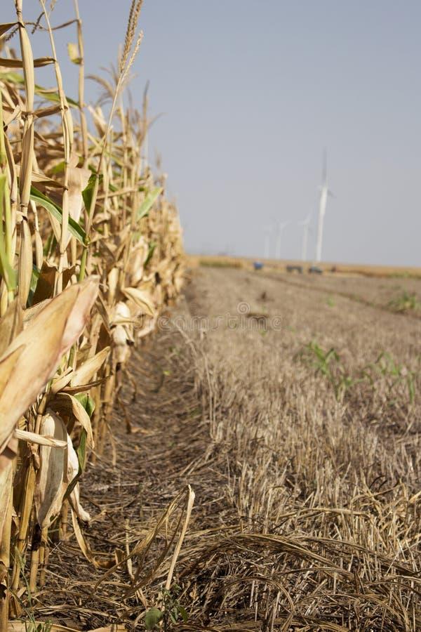 准备好的麦地收获与距离的风力场 免版税库存图片