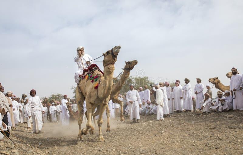 准备好阿曼的人赛跑他们的在的骆驼多灰尘的国家 免版税库存图片