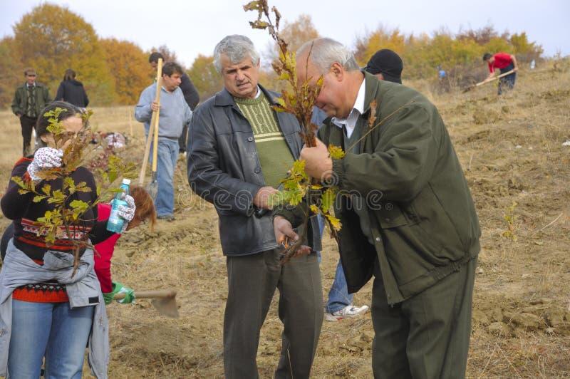 准备树苗的林务员 免版税库存照片
