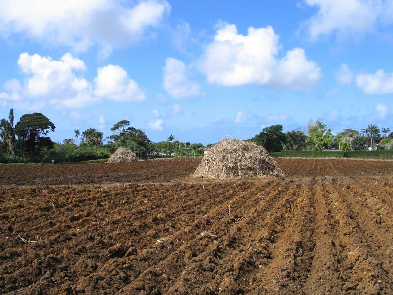 准备的土壤 免版税库存照片