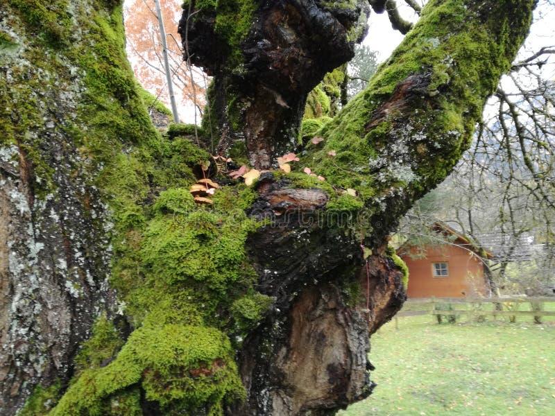 凉快树木的自然 库存图片