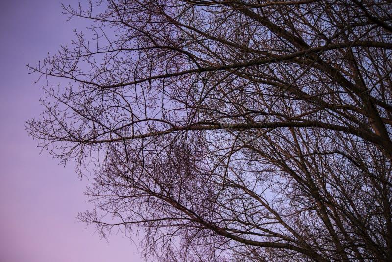凉快的午夜松弛树 免版税库存照片