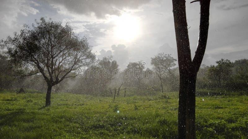 凉快的夏天雨和太阳 库存图片