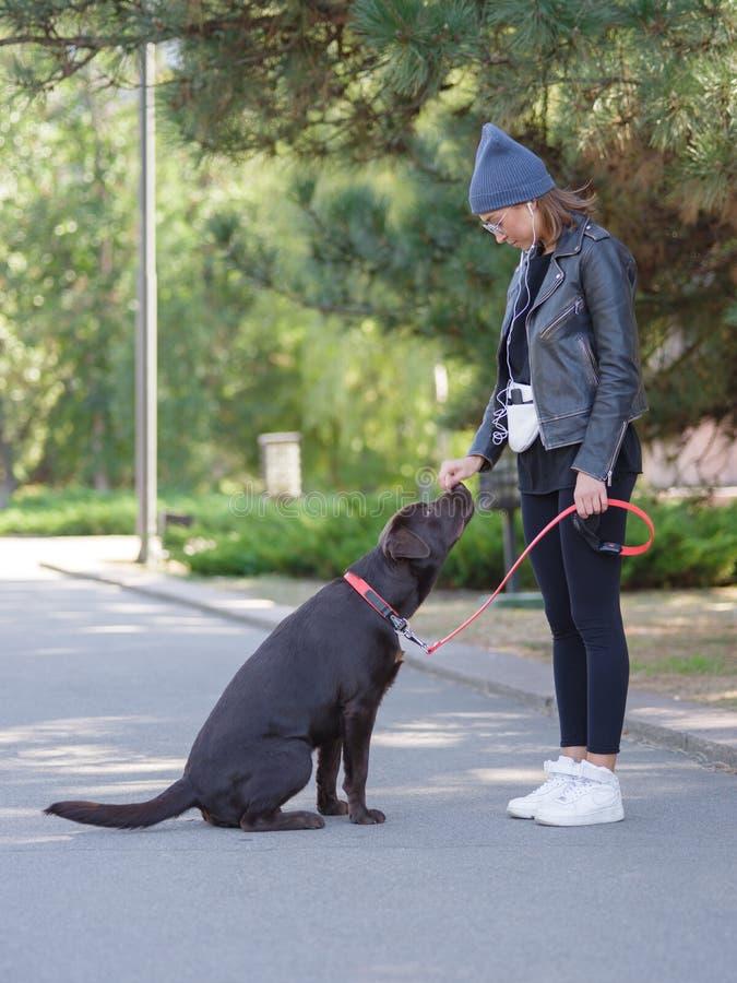 凉快的狗和女孩获得乐趣一起在街道上户外 免版税库存图片