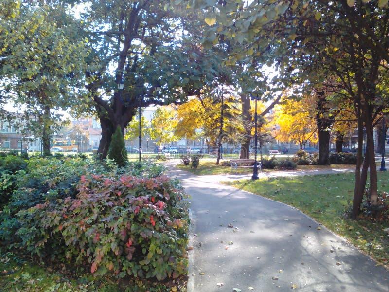 凉快的看法在公园 免版税库存图片