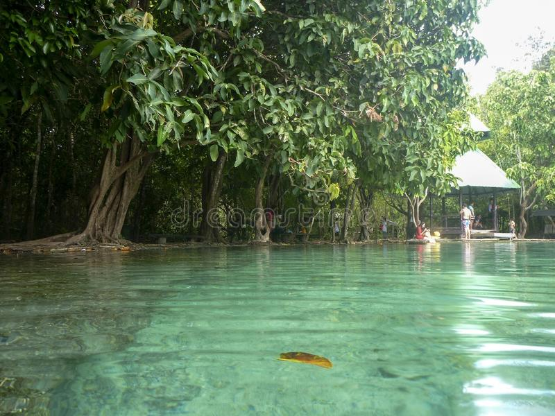 凉快的鲜绿色水池 免版税库存照片