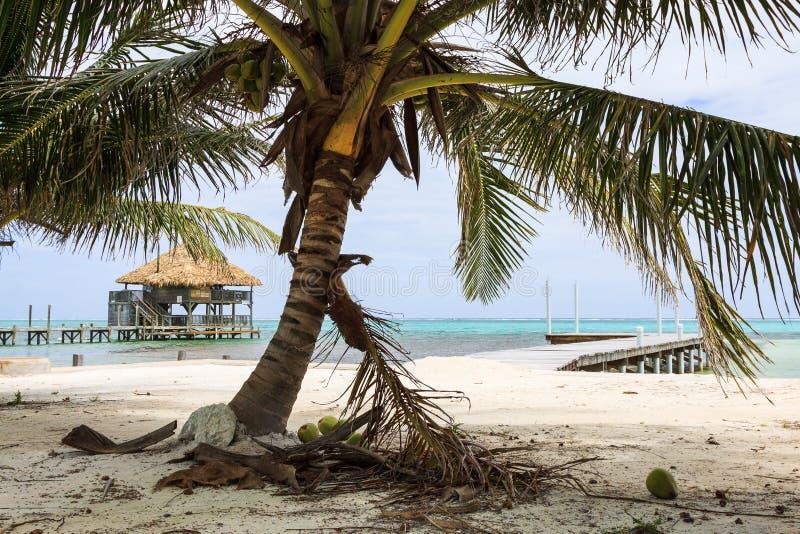 凉爽的微风吹的可可椰子在伯利兹 库存照片