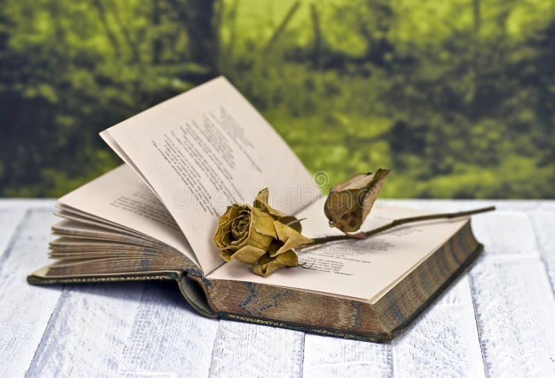 凋枯的书玫瑰 免版税库存图片