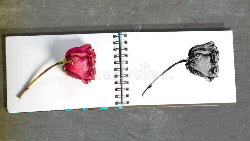 凋枯的玫瑰和剪影在白色写生簿 库存照片