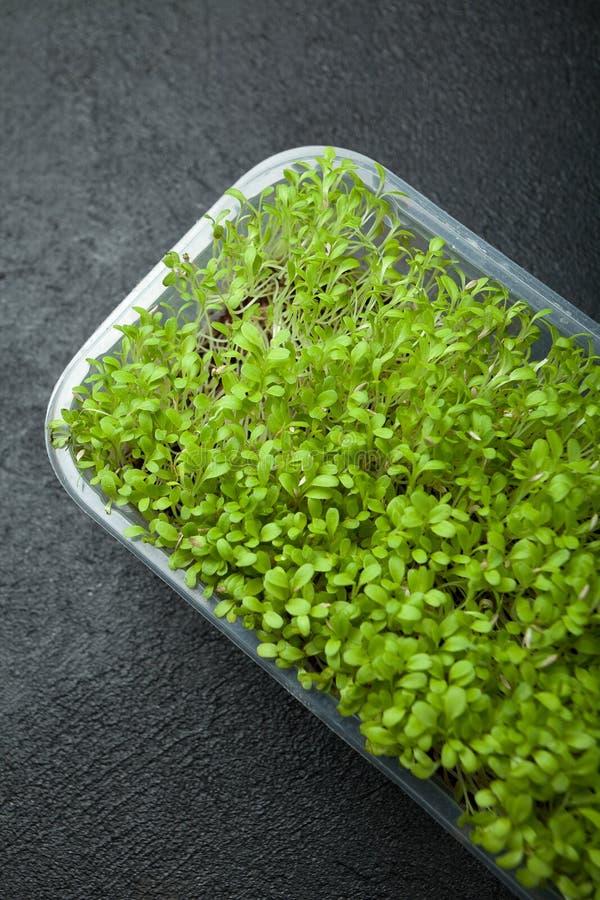 减肥的新鲜蔬菜新芽在塑胶容器 免版税库存照片