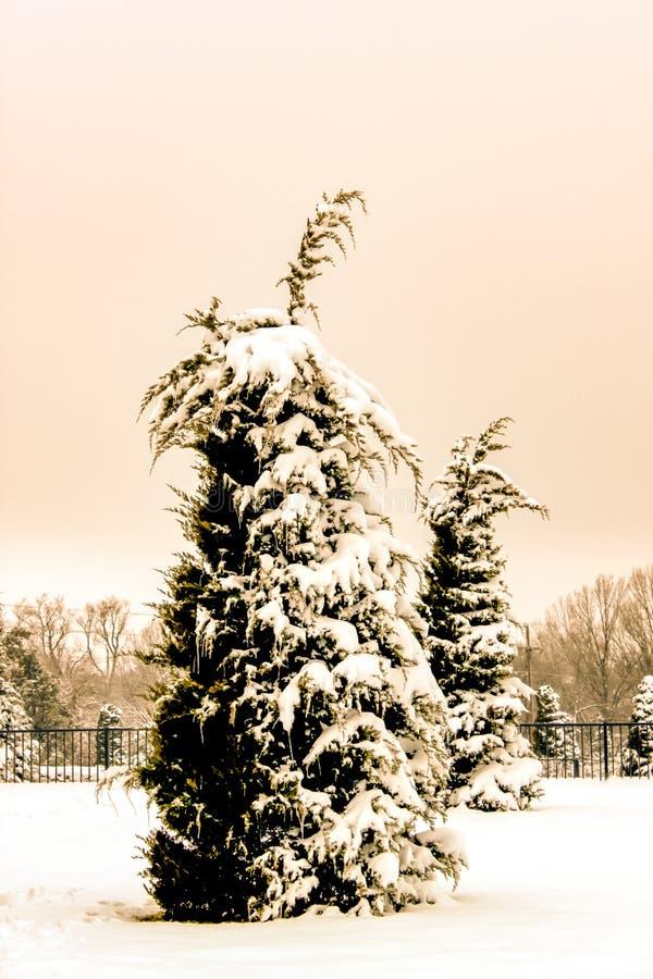 减速火箭的乌贼属设色了雪,并且Icle用其他树在背景中盖了树弯曲按雪和铁篱芭重量 免版税图库摄影