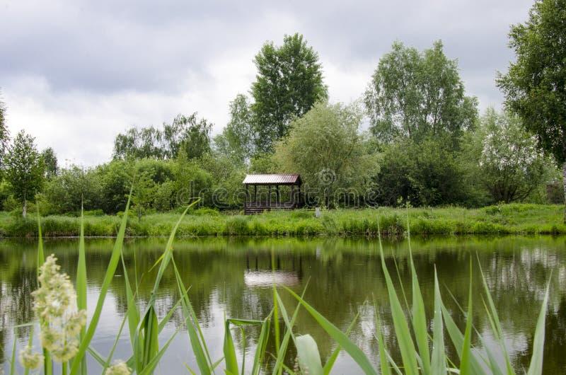 凝思木眺望台立场的一个地方湖的岸的在年轻树附近的 库存图片