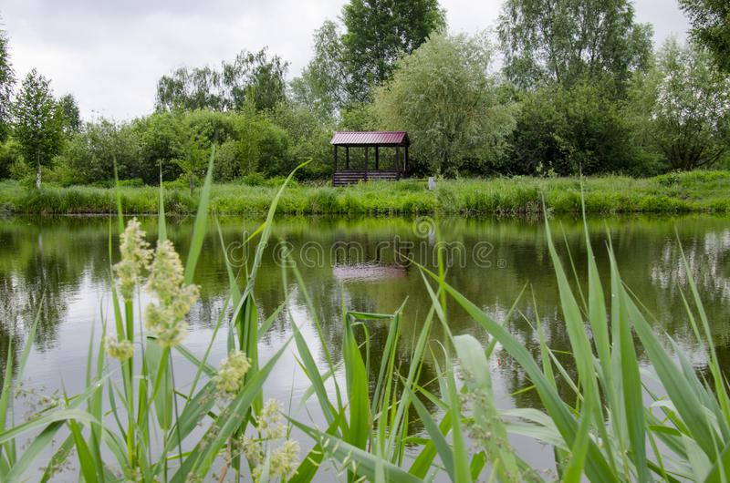 凝思木眺望台立场的一个地方湖的岸的在年轻树附近的 免版税库存图片