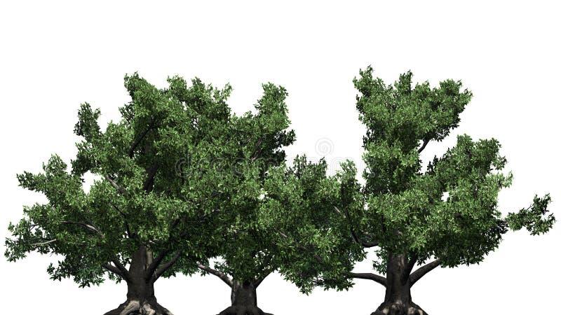 几不同的欧洲山毛榉树 向量例证