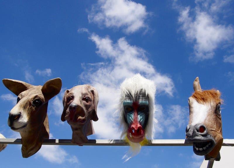 几个动物面具 库存照片