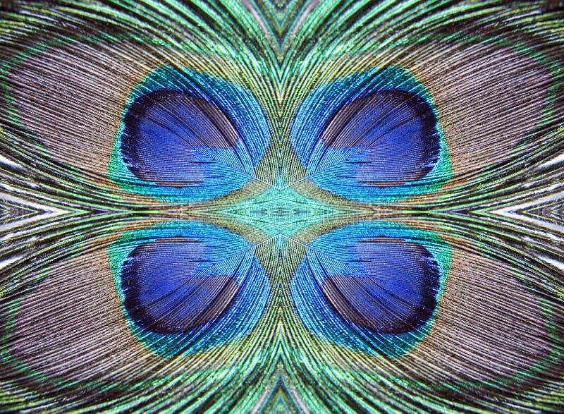 几何孔雀用羽毛装饰样式 免版税库存图片
