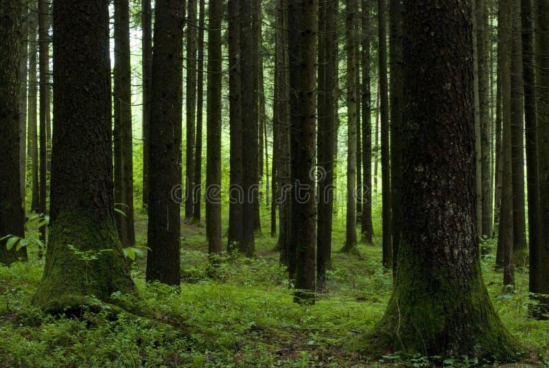 几何结构树 免版税图库摄影