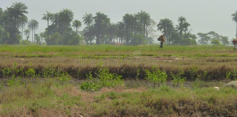 从几内亚比绍的场面 免版税库存照片