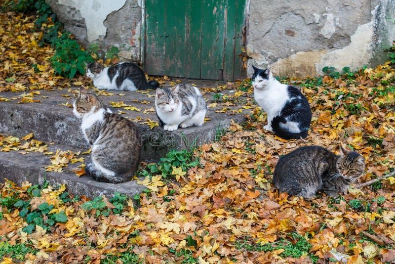 几只猫在老大厦的步会集了 库存照片