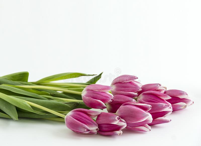 几朵郁金香花水平在底部 库存图片