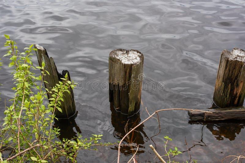 几根木柱子在岸的水中 库存照片