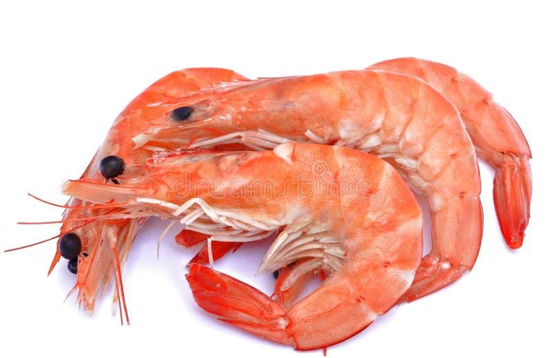 Download 几虾 库存照片. 图片 包括有 海运, 海鲜, 捕鱼, 鲜美, 饮食, 宴餐, 自然, 正餐, 食物, 选矿 - 22351076