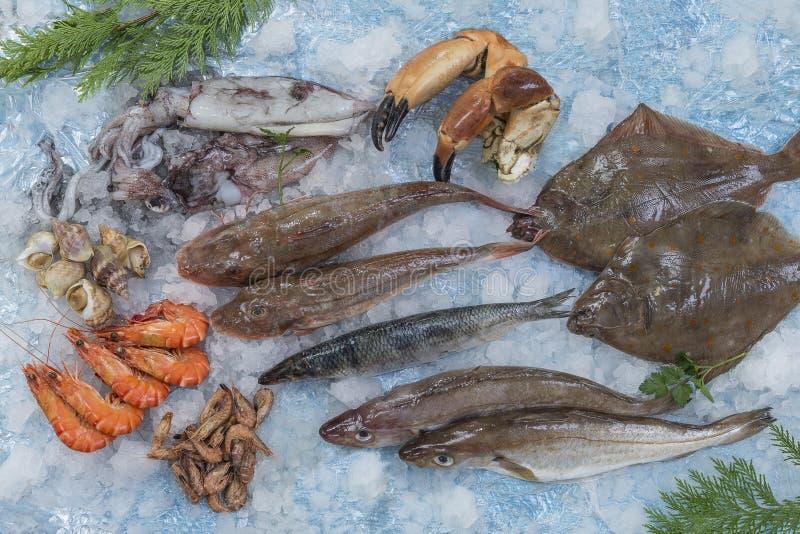 几鲜鱼的类型在地中海海鲜市场上的在蓝色背景的冰 库存图片