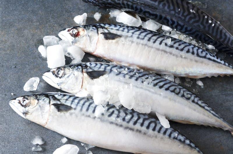 几mackereles行与冰块的在灰色鱼贩子的空间 免版税库存照片