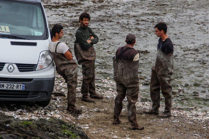 凯尔特海工作的海岸的工作者在牡蛎农场的 海农场 库存照片