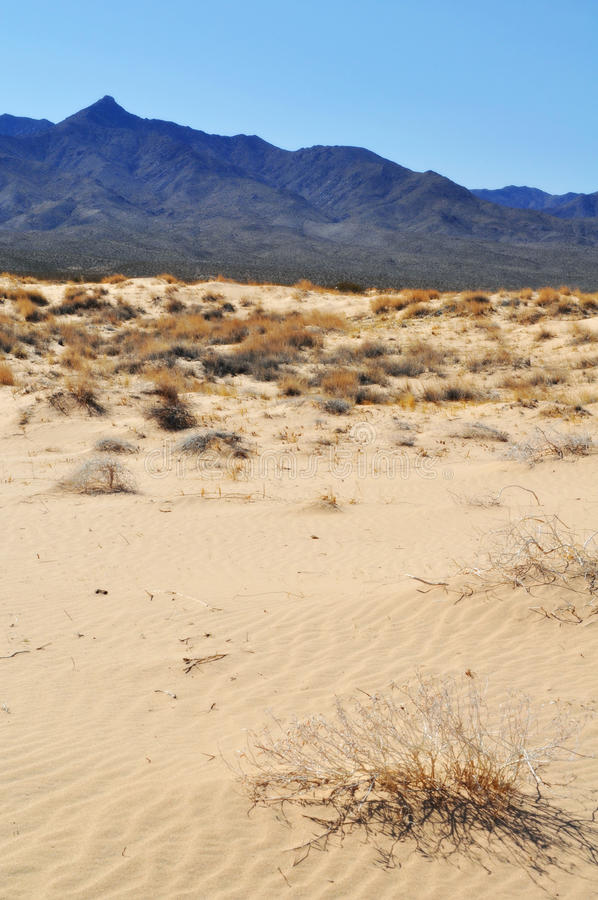 凯尔索沙丘,莫哈韦沙漠全国蜜饯 免版税库存照片
