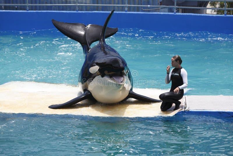 凶手lolita鲸鱼 免版税库存照片