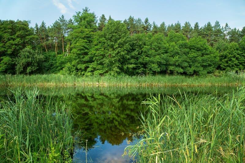 出于对森林考虑的夏天风景,河,岸 图库摄影
