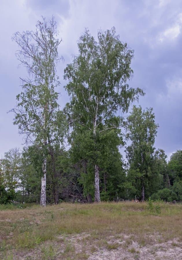 出于对森林考虑的风景 免版税库存图片