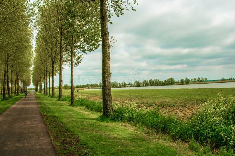 出去见见大自然 树,蔚蓝的天空,云朵 草是绿色的! 免版税库存图片
