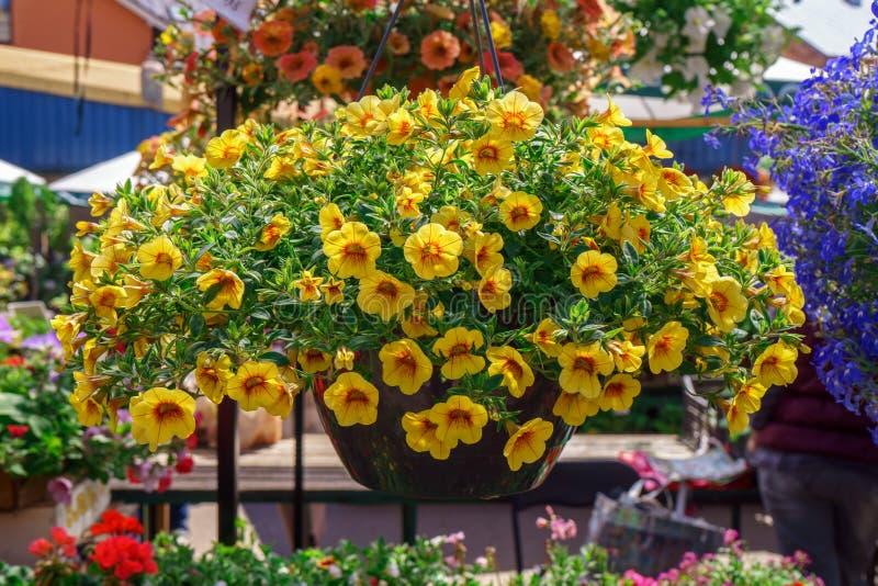 出售的五颜六色的喇叭花花,在街市上 免版税图库摄影