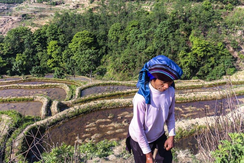 出席他的稻田的农夫在Yunayang米大阳台 免版税库存照片