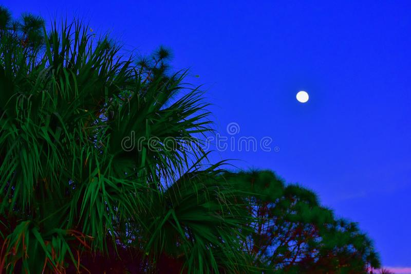 出现在日落之前的月亮 库存照片