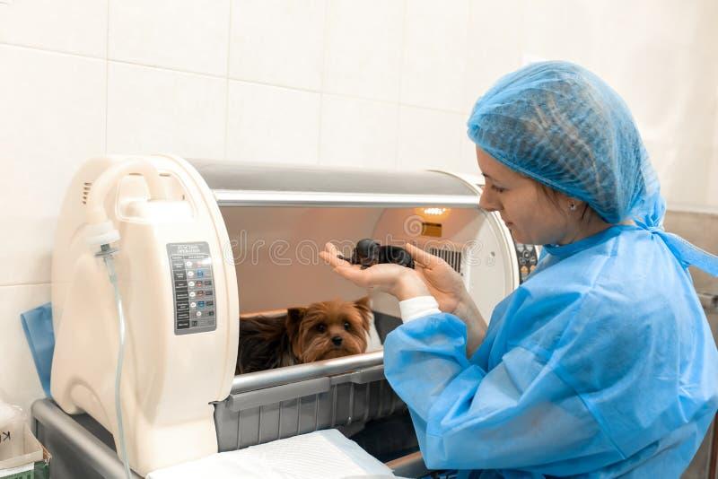 出生小狗在宠物医院 宠物医疗保健概念 免版税库存照片