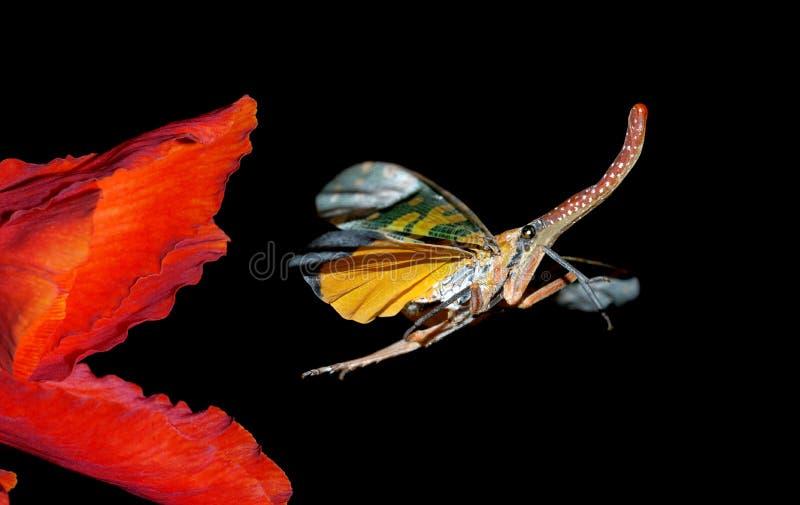 出逃飞行昆虫本质 图库摄影