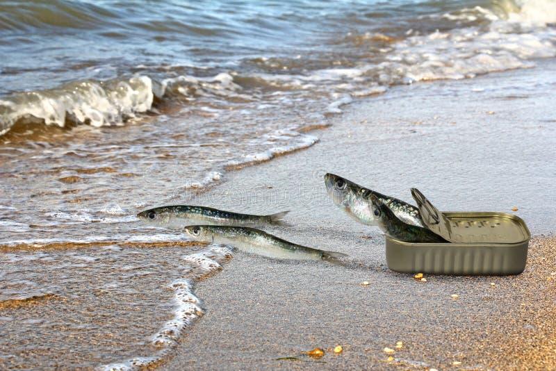 出逃从罐头的罐装沙丁鱼 免版税库存照片