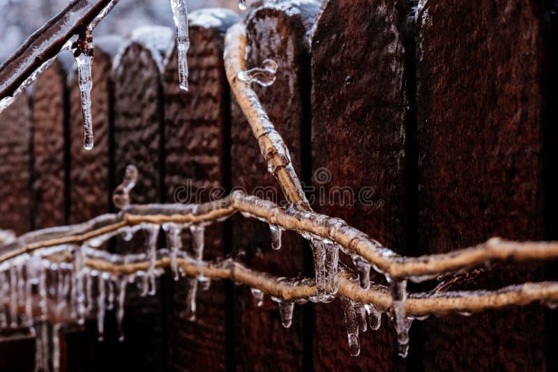 击中自然的冻雨 分支冰柱结构树 盖在冰 库存图片