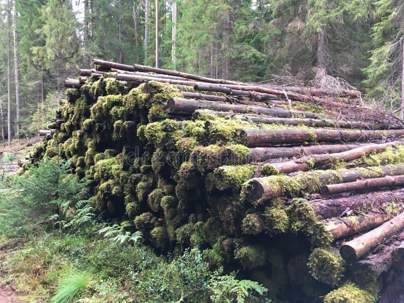 击倒的树干 图库摄影