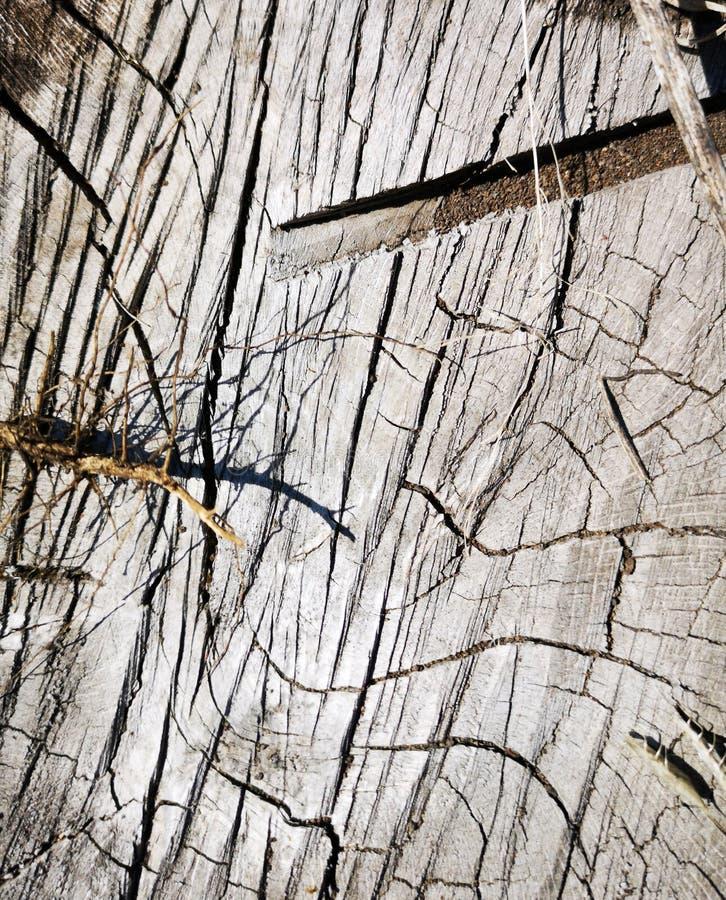 击倒的树橡木大麻纹理 库存图片