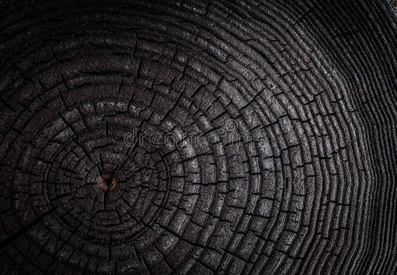 击倒的树被烧焦的树桩-树干的部分与年轮的 切片烧了黑木头 免版税图库摄影