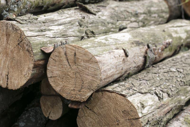 击倒的树,对生态系的威胁堆  免版税库存图片