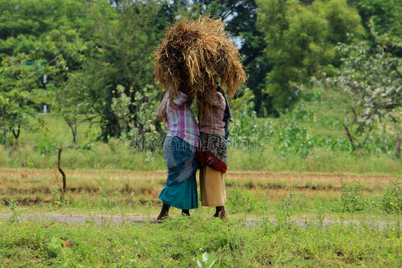 分享秸杆捆绑的妇女 免版税库存照片