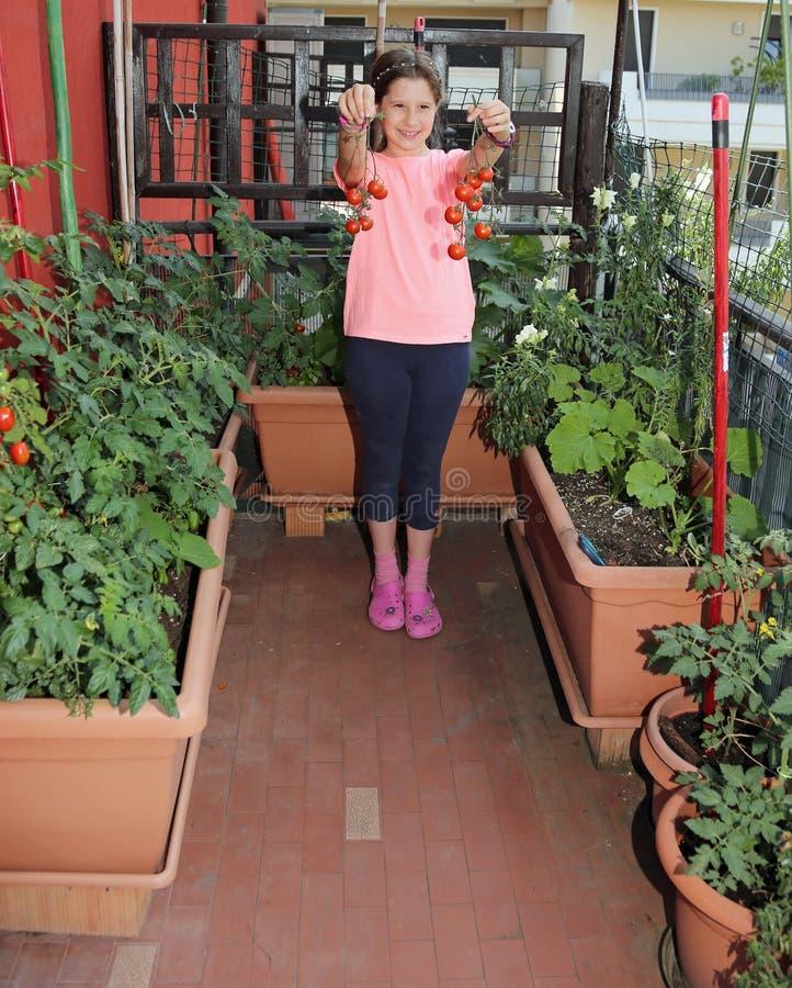 分开显示蕃茄的收获微笑的小女孩在她 库存图片