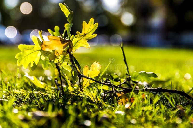 分支与在草的叶子在一美好的晴朗的秋天天 免版税库存照片