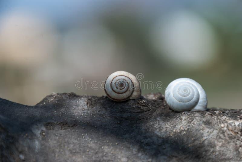 分支与蜗牛外皮  图库摄影